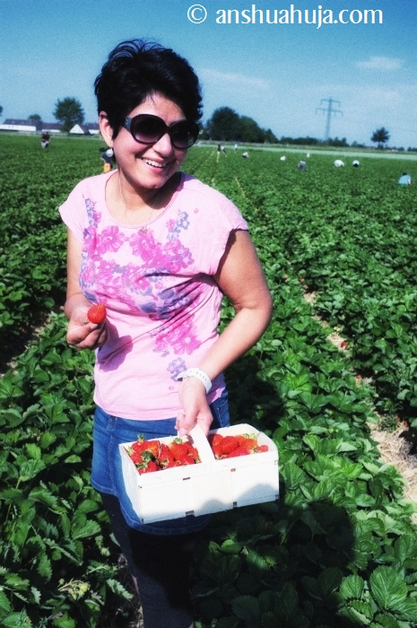 StrawberryPicking2014_04