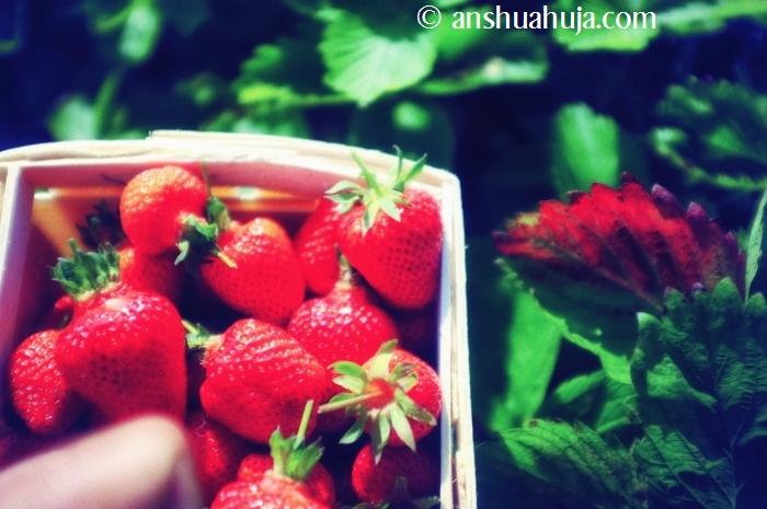 Went for strawberry picking