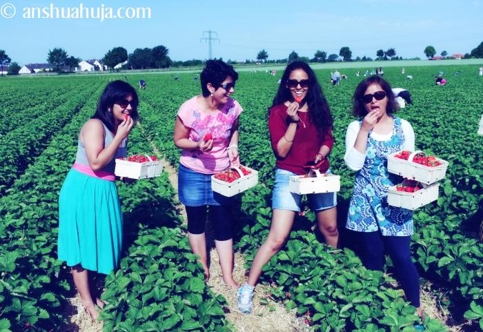 StrawberryPicking2014_06