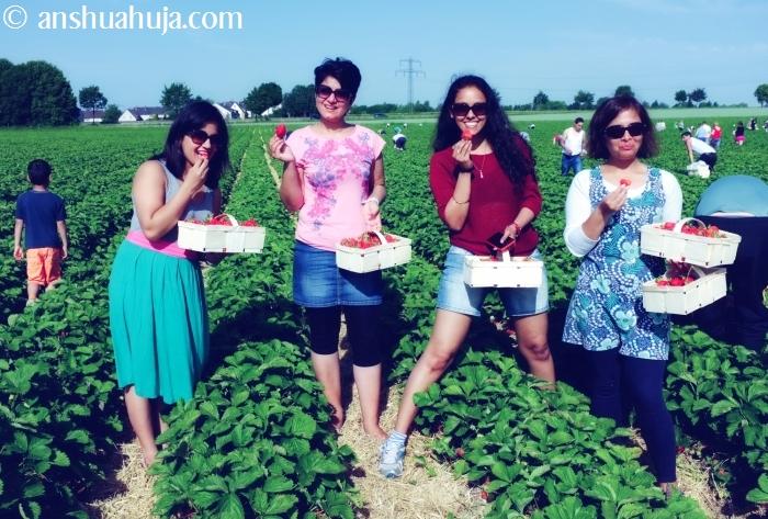 StrawberryPicking2014_07